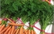 close up view of carrots to represent J&E Hall's refrigeration for food sector.